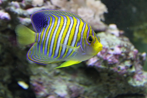 Most beautiful saltwater fish all time page 3 for Best saltwater fishing times
