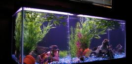 75 gallon freshwater cichlid tank