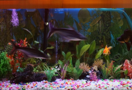 100 G Freshwater Tank with some live plants