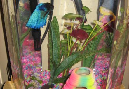 5 gallon hex tank bio wheel filter male betta named Bubbles