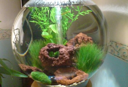 60 litre biorb this is my second tank my first tank is currently number 1 out of 1477 under spirulina31