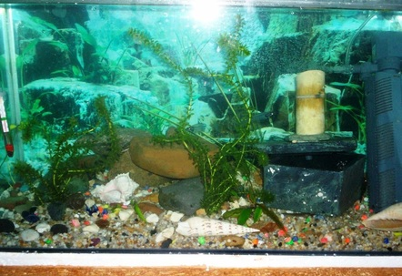 dwarf cichlid tank 2 5 foot whipped up in 1 day