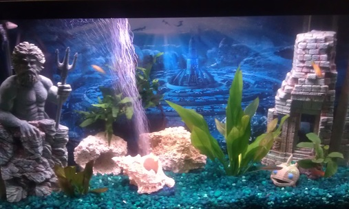 Finatic 39 s freshwater tanks details and photos photo Livebearer aquarium fish