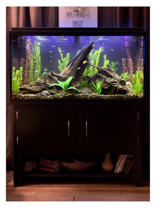 Most beautiful freshwater tanks all time for Aquarium stone decoration