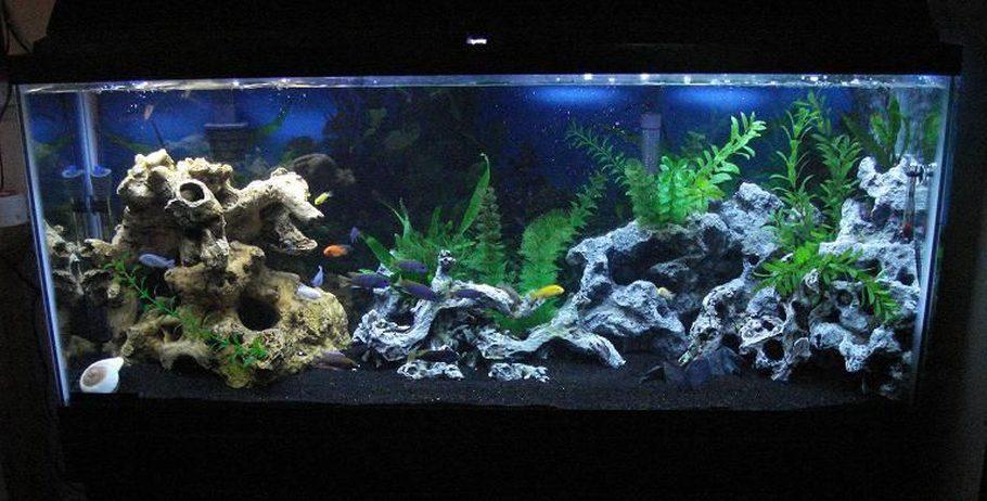 Awkatik 39 s freshwater tanks photo id 16235 full version for Black sand fish tank