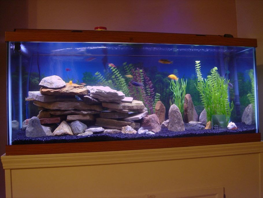 Meandthekids 39 s freshwater tanks photo id 24276 full for How much is a fish tank