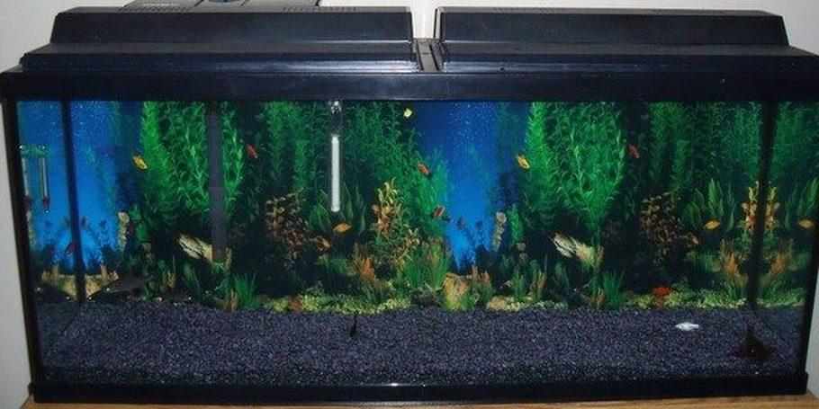 Joshheatherc 39 s freshwater tanks details and photos photo for Fish tank ice method