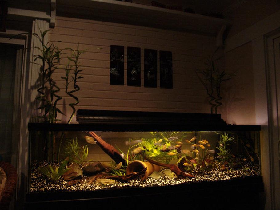 Xgromx 39 s freshwater tanks photo id 27350 full version for White algae in fish tank