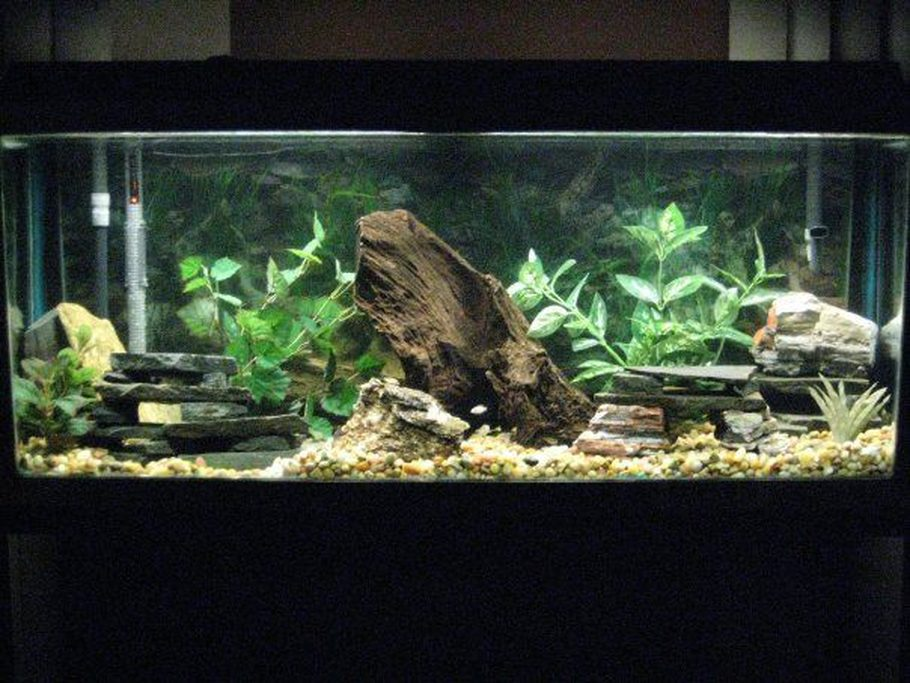 Mariod's Freshwater Tanks Photo (ID 31294) - Full Version ... 10 Gallon Fish Tank Ideas
