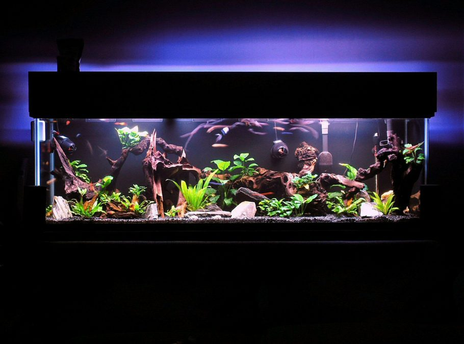 Aquarium decoration ideas youtube diy aquarium for 10 gallon fish tank decoration ideas