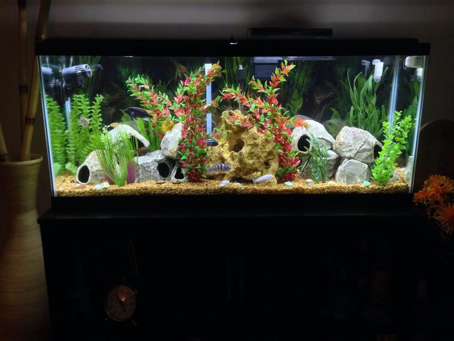 Ryan944 39 s freshwater tanks photo id 40817 full version for 55 gallon aquarium decoration ideas