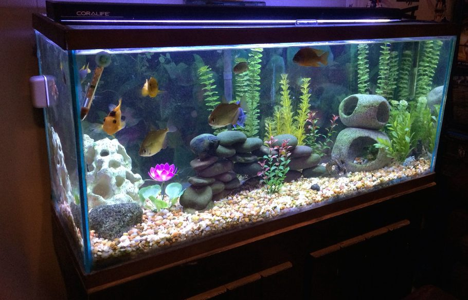 Kylefoley 39 S Freshwater Tanks Details And Photos Photo