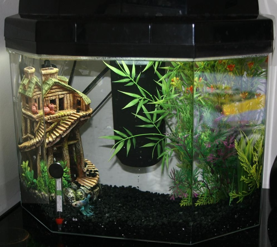 Siamesefishgirl 39 S Freshwater Tanks Photo Id 29058 Full