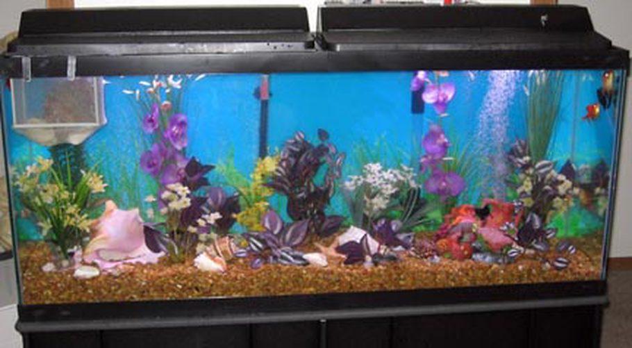 superfish home 15 zwart aquarium