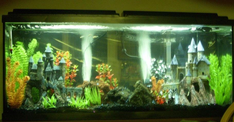 Grayantimatter S Freshwater Tanks Photo Id 38320 Full