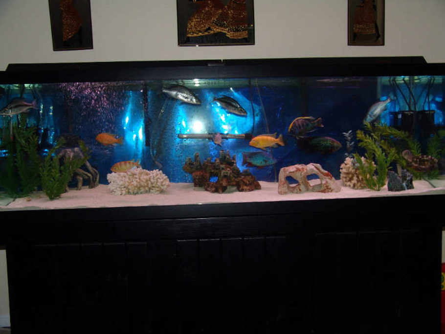Hotdogstuff 39 s freshwater tanks photo id 7186 full for 125 gallon fish tank
