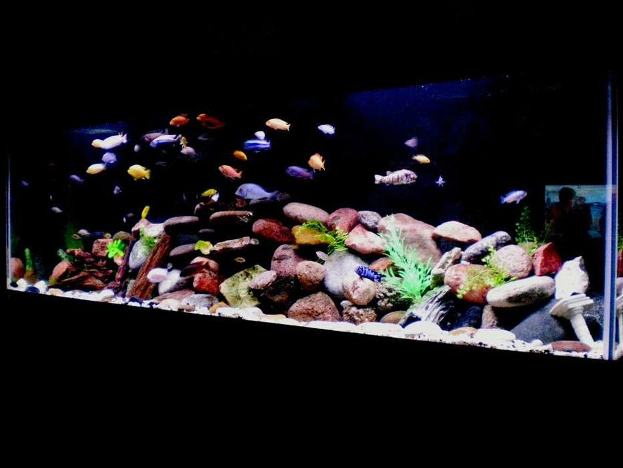 Peteaduran 39 s freshwater tanks photo id 8494 full for African cichlid rock decoration
