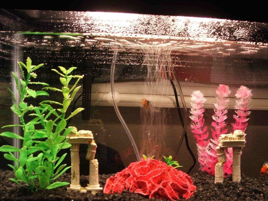 396fire 39 s freshwater tanks photo id 15033 full version for Dirty fish tank