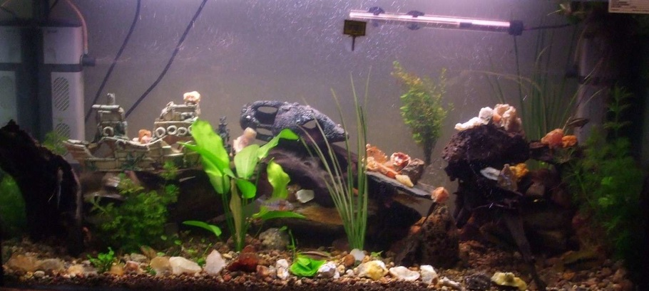recently rearranged lots more hiding places, crystals, water lillies(still small) and my rainbow cichlids(bottom right) have lots of babies, most fish are hiding, will get a better picture