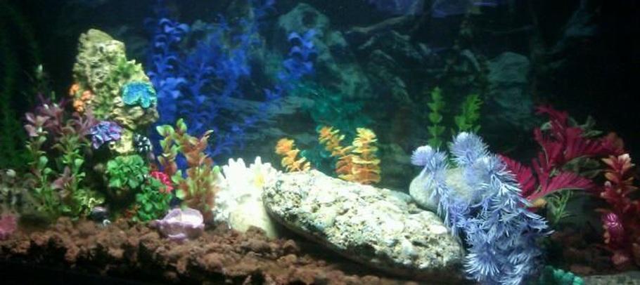 My tank before adding fish
