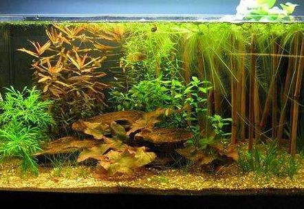 13 gallon Asian biotope