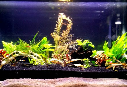 15 gallon planted tank with a variety of fish
