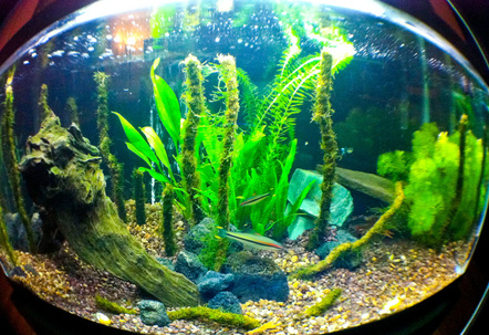 40 gallon70 and 40 gallon filtershad tank for a year went from fake stuff to newly planted i know its gravel but working well so far Java fern moss n two other plantsroseline sharks a lobster and mexican shrimp and a couple guppys