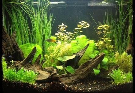 29 gallon fish tanks page 27 for 29 gallon fish tank dimensions
