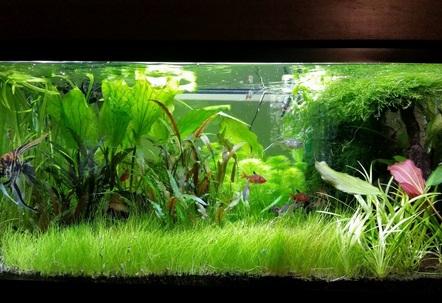 My Planted Tank