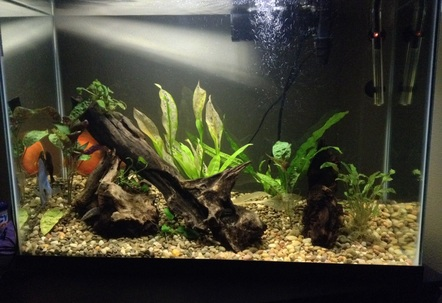 Taken today Scared the fish a little so they went to hiding And will also be replacing plants that my plecos sucked the life out of