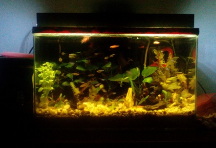heavily planted tank anubias nana anubias petitegreen cabomba bacopa moniera malayan fern red tiger lotus green tiger lotusanacharis small green cryptocorynetrimmedetc fishes like cardinal tetra neon tetra harlequin tetra pencil fish danios and clams for natural filtrationespecially diy o caseserved as co2 diffuser and as water pump