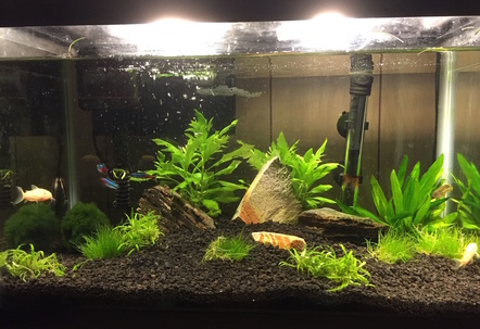 replanted