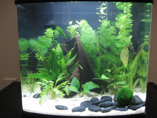 Im a newb to the freshwater plant aquarium scene  Ive taken care of salt and fresh water fish but Ive never done plants  I knew this would happen  I love my 8 gallon but now i want a bigger tank haha!