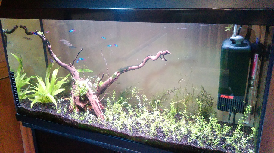 Using driftwood and live plants in the freshwater tank for Fish tank driftwood