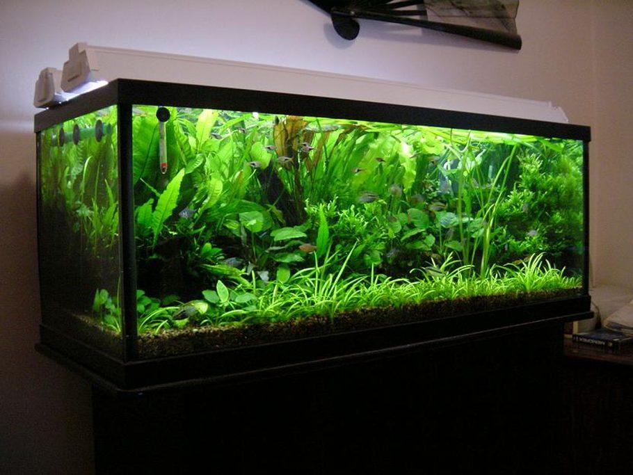 Aquascaper's Planted Tanks Photo (ID 121) - Full Version | RateMyFishTank.com