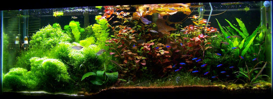 4 Foot 50 Gallon Tropical community tank.