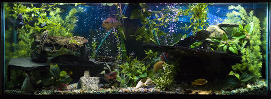 Dragon85 39 s planted tanks photo id 21758 full version for 150 gallon fish tank for sale craigslist