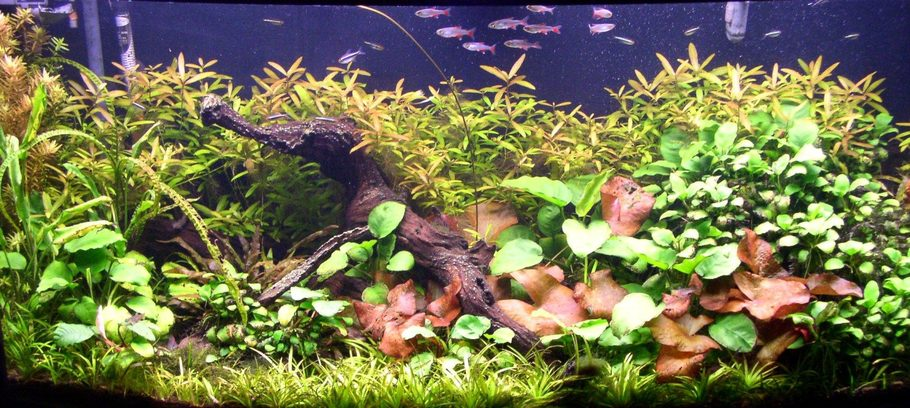 72 Gallon Bowfront, hardwater plants