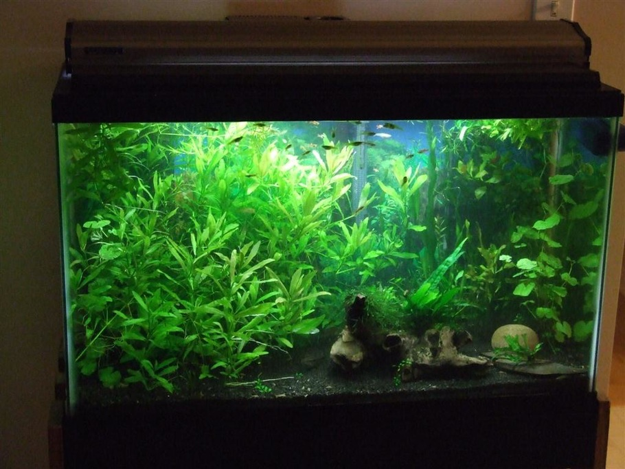 Aiglos 39 S Planted Tanks Photo Id 2956 Full Version