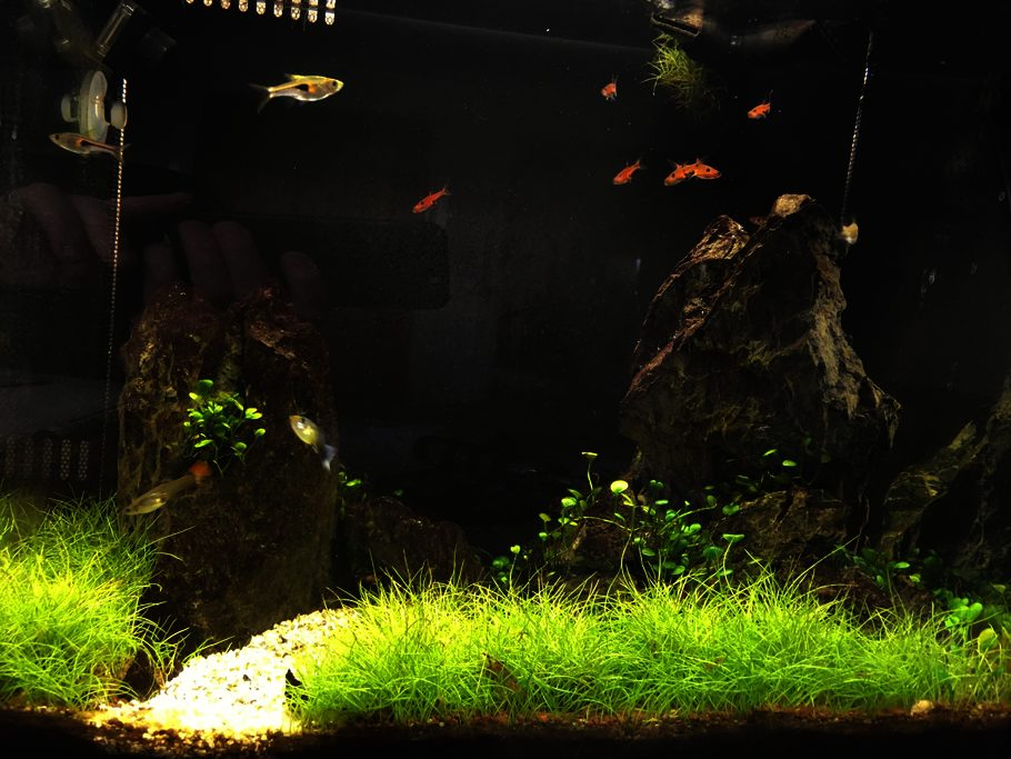 Fluval Flex 34L nano tank. Curved from means I cannot get a picture without a reflection in it.