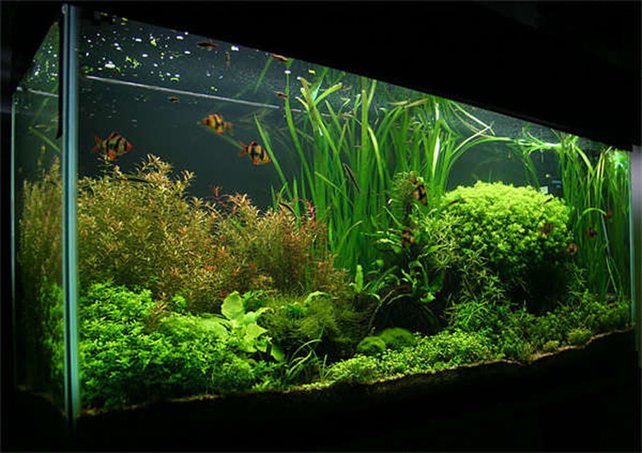 55 gallon. Carbo Plus CO2. 220 watts 5500K power compact fluorescent lighting.