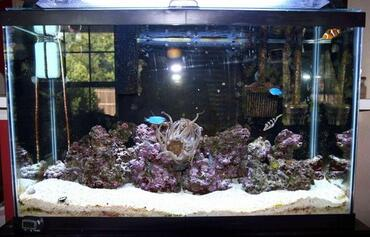 Establishing up a Clean-up Crew in Your Saltwater Aquarium