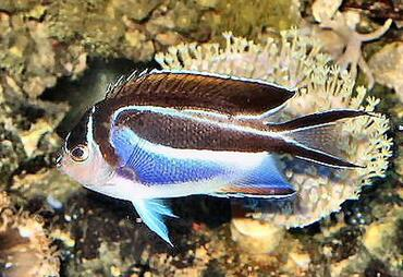 Why do fish disappear from the saltwater tank for How to saltwater fish