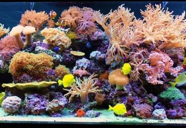 Why Do Fish Disappear from the Saltwater Tank?