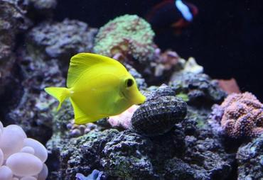 How Aquarium Trends Affect the World