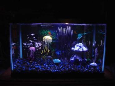 Trending: Jellyfish in the Home Aquarium