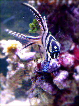Tips for Keeping Nocturnal Fish in the Marine Aquarium
