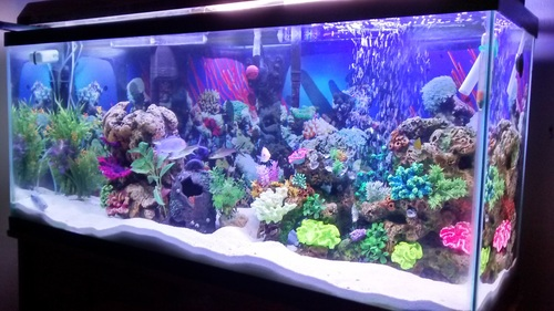 Selecting a background for your freshwater tank for Best freshwater aquarium fish combination