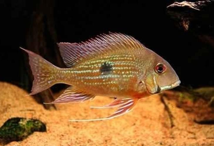 Breeding Freshwater Fish