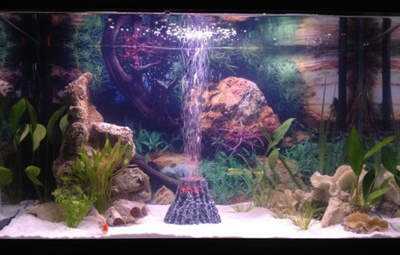 Understanding the Basics of Freshwater Aquarium Lighting